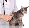 Ветеринарные клиники в Васильсурске